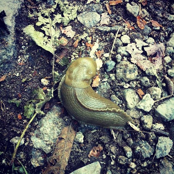 Instagram-Nature-Blogger-Hiking-Washington