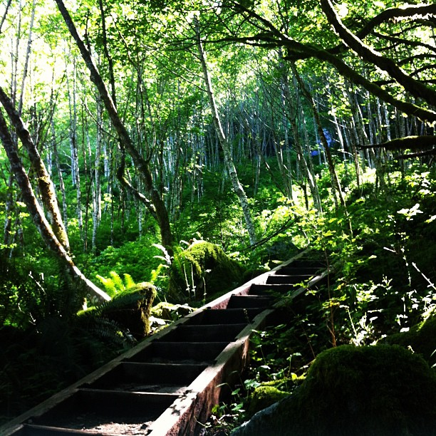 Blogger-Nature-Forest-Green-Trees