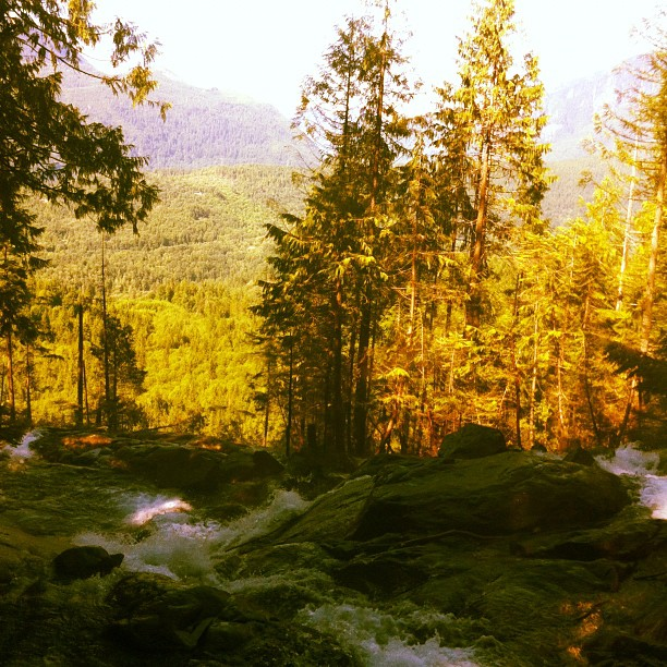 Waterfall-Blogger-Forest-Green-Trees
