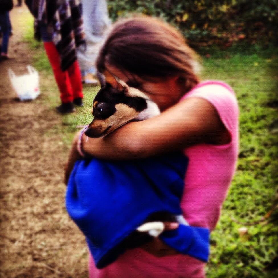 Dog-Instagram-Pets-Cute