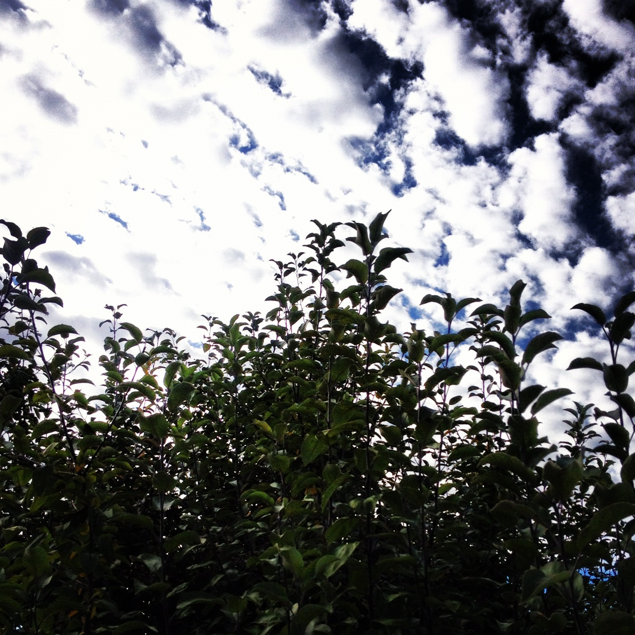 Instagram-Sky-Trees-Tree-Clouds