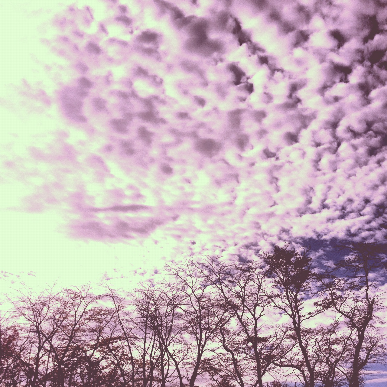Instagram-Sky-Trees-Clouds