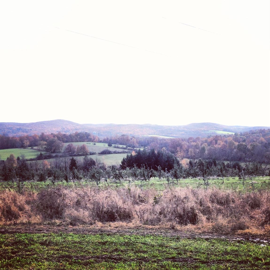 Instagram-Warwick-Hills-Sky-Trees