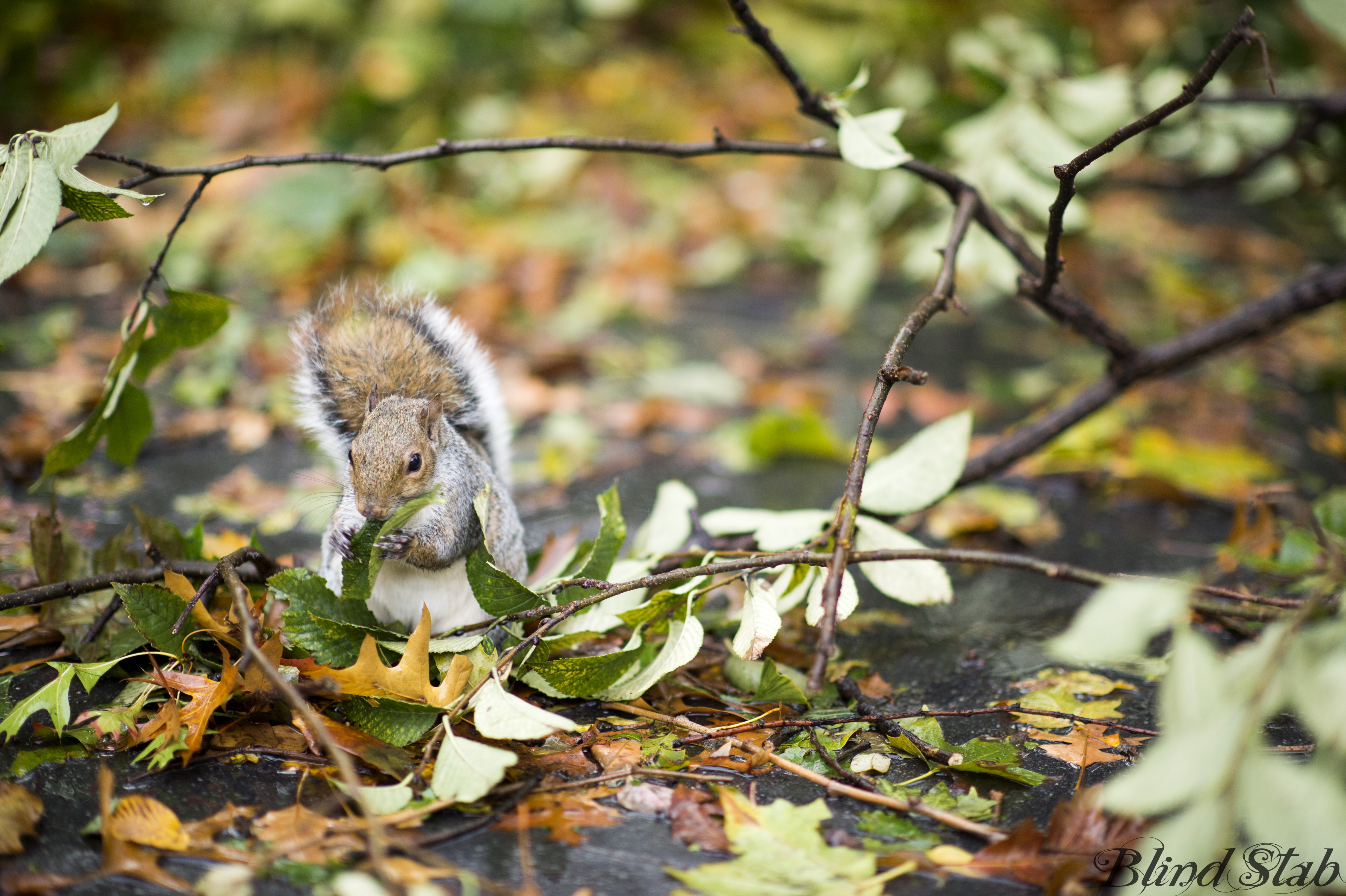 Squirrel-Leaves-Central-Park-New-York