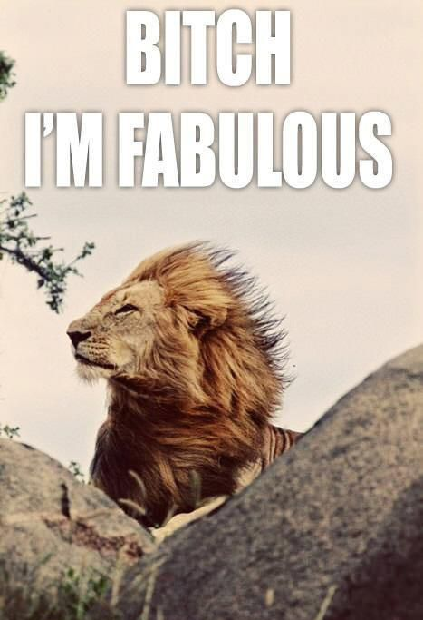 bitch-im-fabulous_o_725529