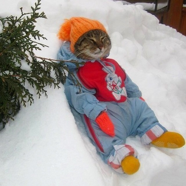 Cat in snow funny cats dressed in clothes cat in hat meme