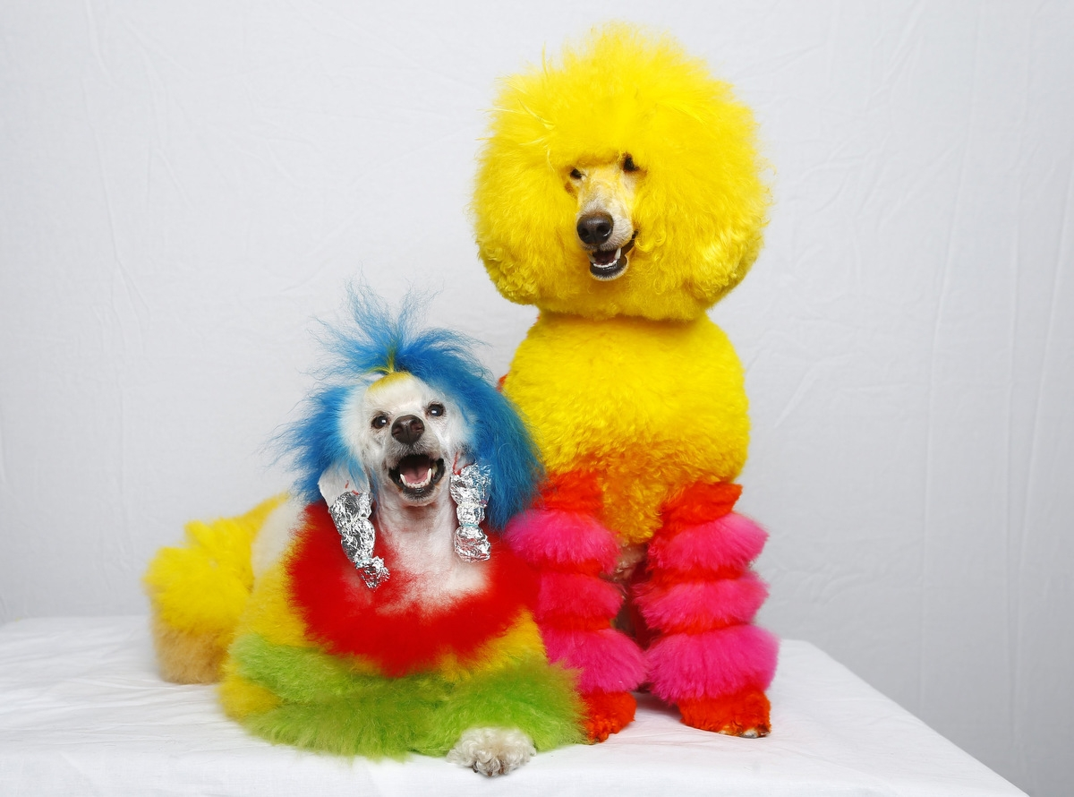 Colorful pets